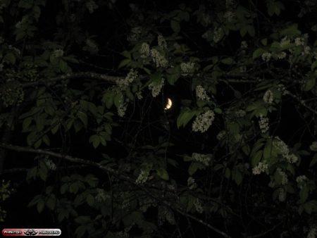 Холодная лунная ночь