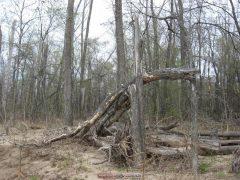 Поваленные деревья, судя по всему сами по себе