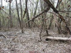 Лес на острове