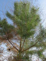 хвойное на фоне лиственного