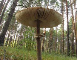 Сходил за грибами