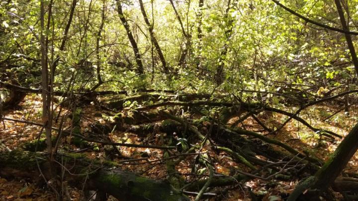 Героизм в осеннем лесу