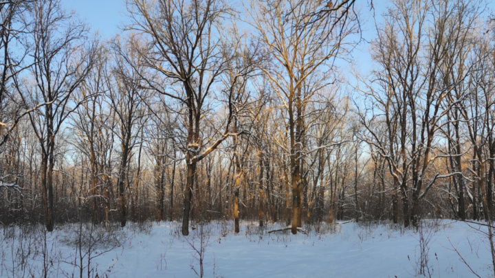 Зимний лес…